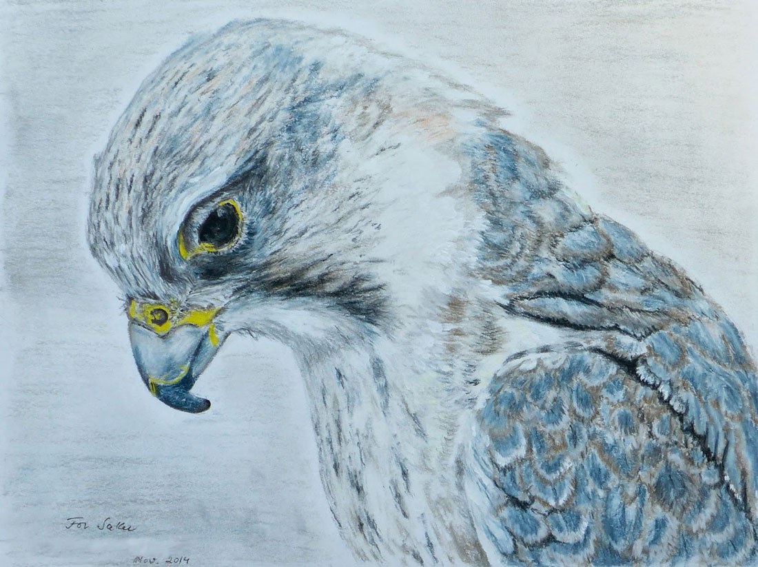 "Saker falcon drawing by ""S.T."""