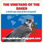 The Saker falcon with St. George's ribbon