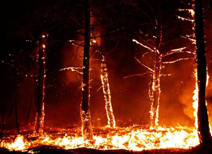 There is a dark and dangerous forest behind these burning trees…
