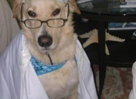 Let the Dog See the Rabbi