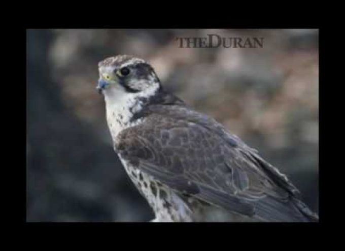The Duran Interviews The Saker: The World According to The Saker (VIDEO)